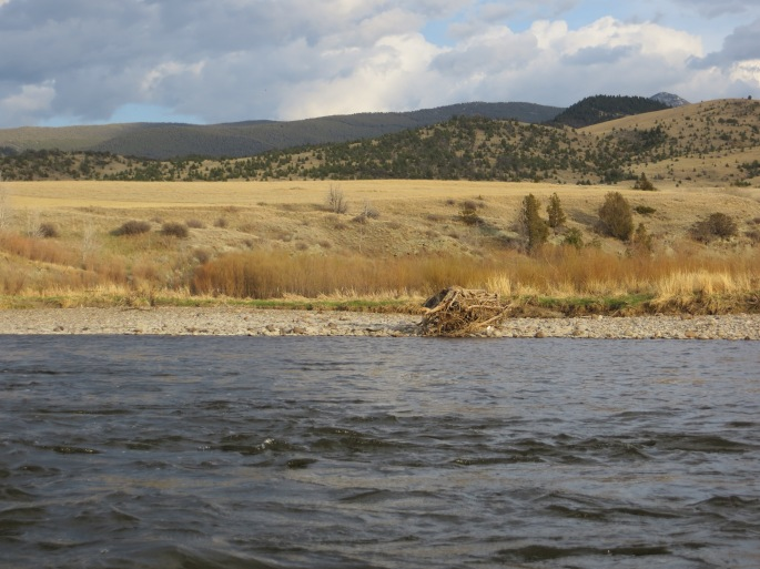 A beaver dam