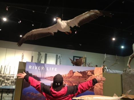 The wing span of a pelican. I have seen pelicans almost every day of my trip. They are a comfort, and good company.