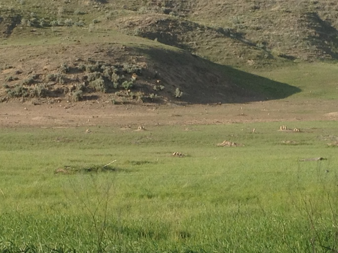 Prairie dog town in back of the camping area. How cool is that!?