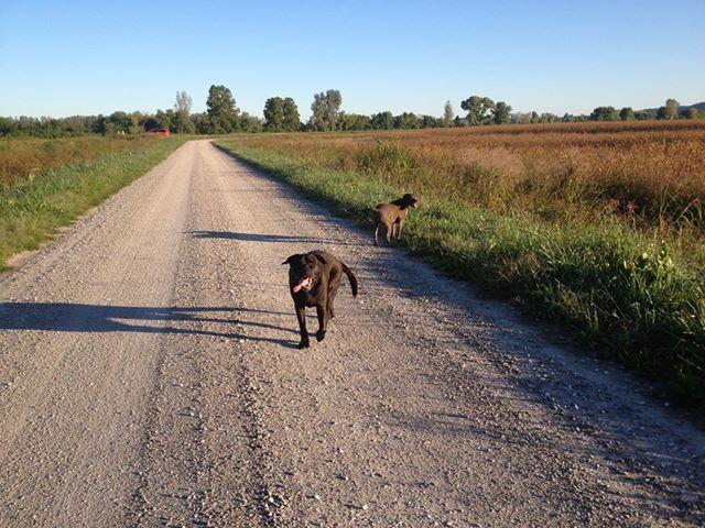 walkingthedogs