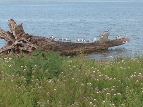I had lots of company at the boat ramp camp