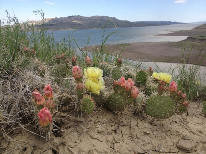 Hiking on windy Fort Peck Lake